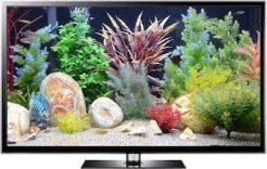 fish tank video
