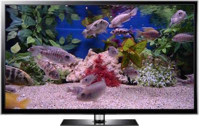 TV aquarium video