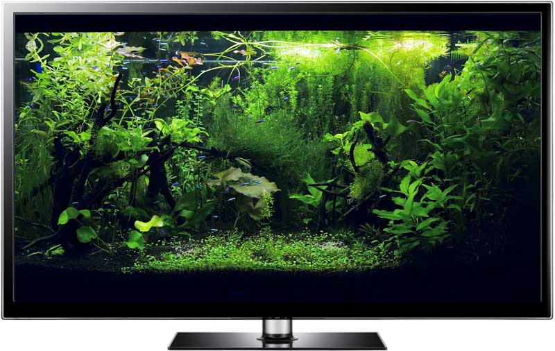 Tetra fish aquarium screensaver with amazing real plants for Tetra fish tank
