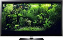 fish aquarium screensaver video Full HD
