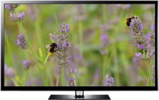 lavender bees summer screensaver
