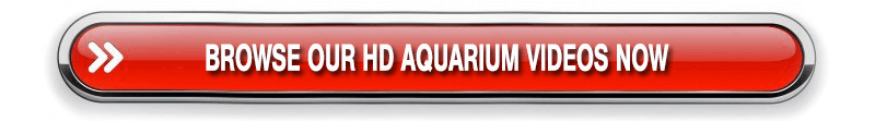 BUY AQUARIUM SCREENSAVERS