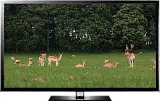 Parkland Deer