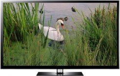 lakeside swan