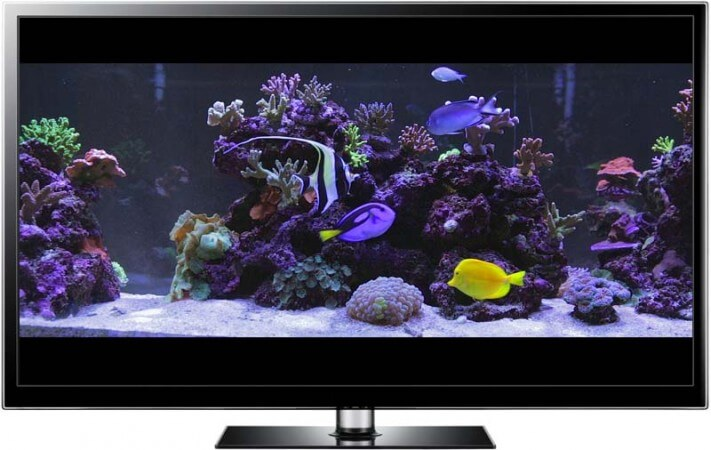 Finding nemo screensaver and video in hd for Fish tank screen