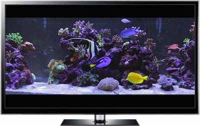 widescreen aquarium video in Full HD