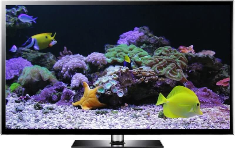 Coral Reef Screensaver and Video - The Coral Reef Tank
