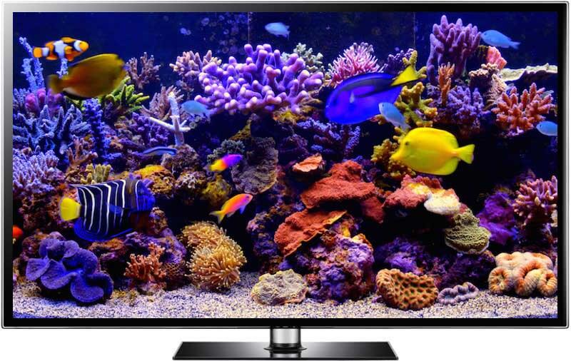 4K aquarium screesaver download