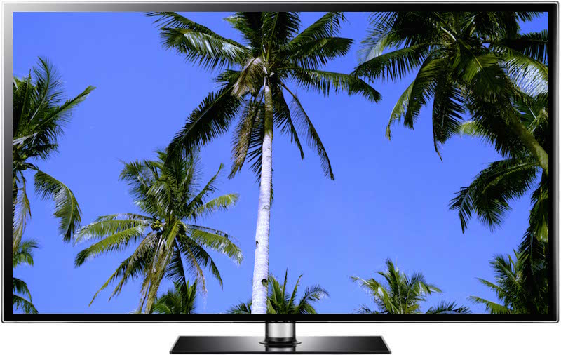 Free beach screensaver for windows and mac computers - Free palm tree screensavers ...