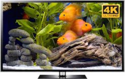 happy fish video 4k