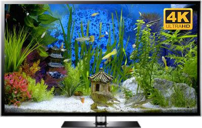 oriental aquarium download in 4K