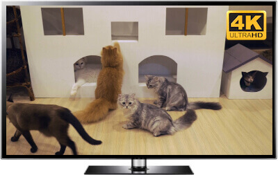 cat cafe screensaver