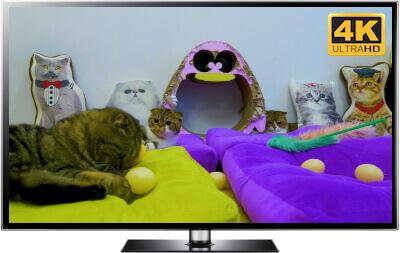 relaxed cats screensaver 4K catnip cute