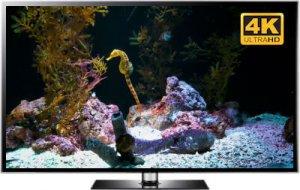 seahorses screensaver video in 4K